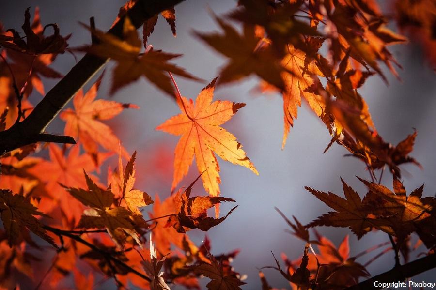 Plan für Herbstferien online!